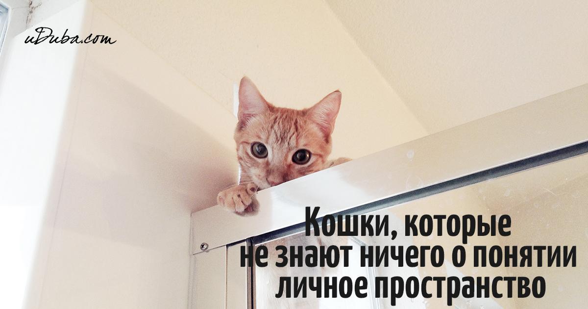 """Кошки, которые не знают ничего о понятии """"личное пространство"""""""