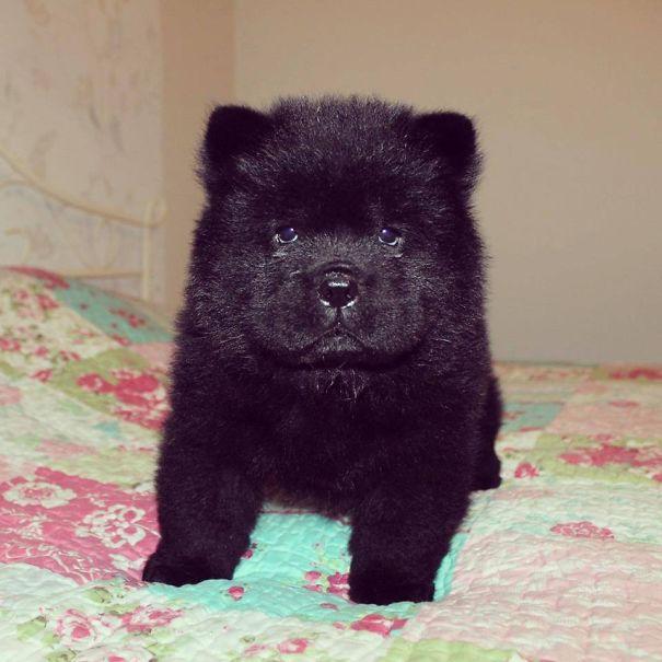 bear-dogs-501__605
