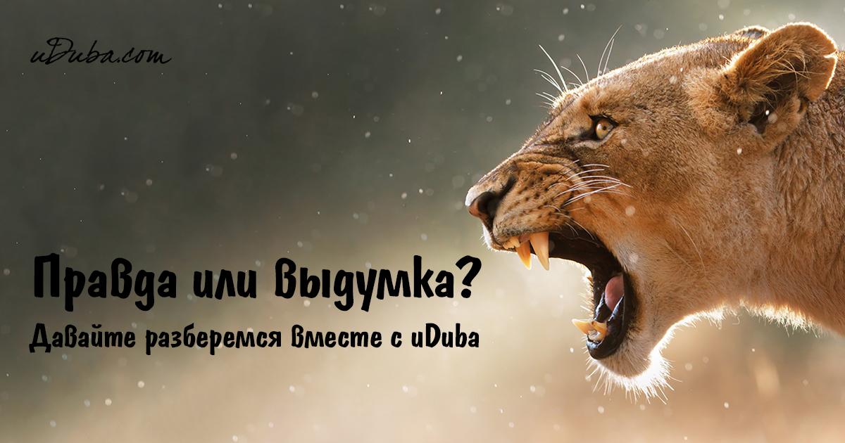 История про львицу и беременную олениху 3