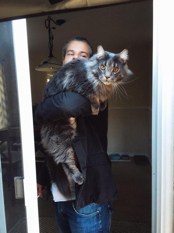 64. кошка, мейн-кун, подборка