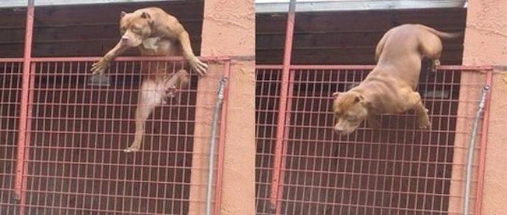Когда дразнил соседских собак неловкость, прикол, юмор