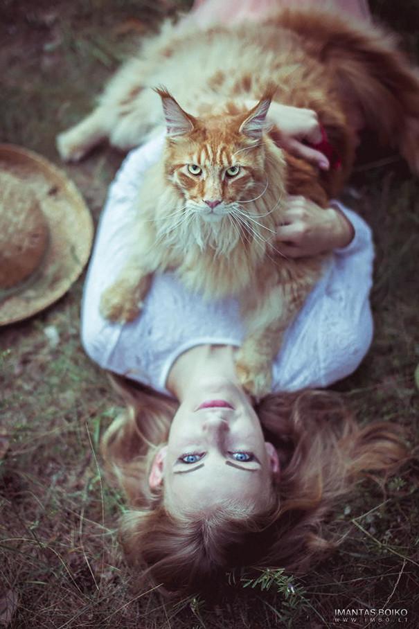 3. кошка, мейн-кун, подборка