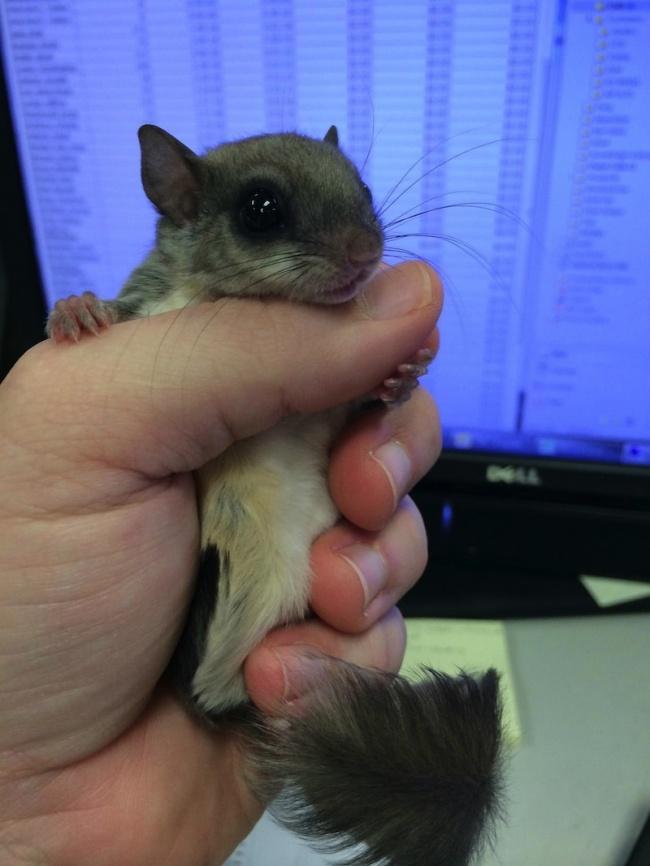 Хлопець з Флориди врятував маленьку істоту - фото 6