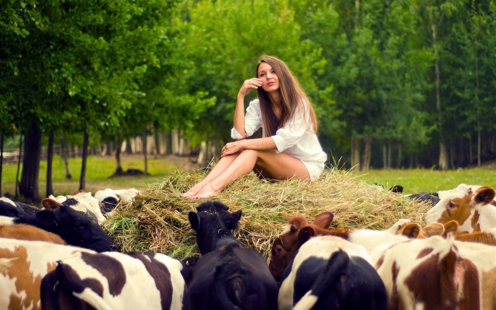 Cow's fucking wallpapers naked videos