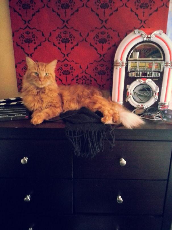 69. кошка, мейн-кун, подборка