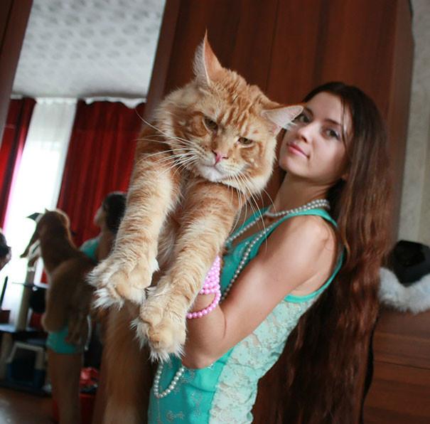 35. кошка, мейн-кун, подборка
