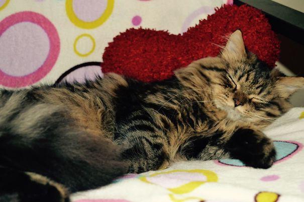38. кошка, мейн-кун, подборка