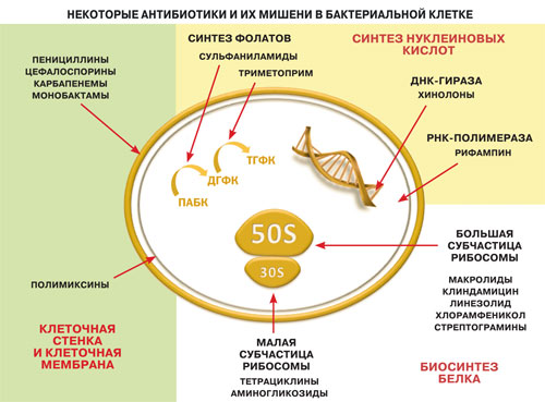 Почему антибиотики не действуют на вирусы