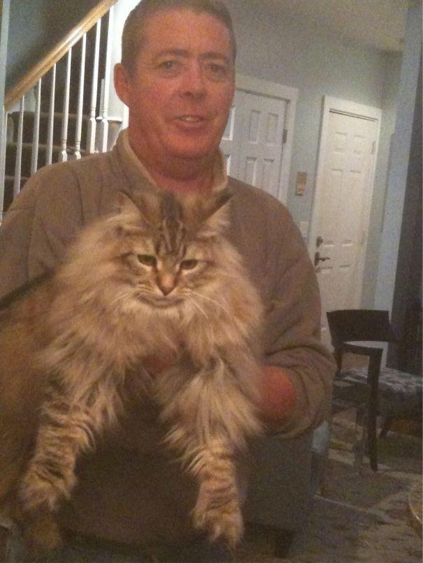 71. кошка, мейн-кун, подборка