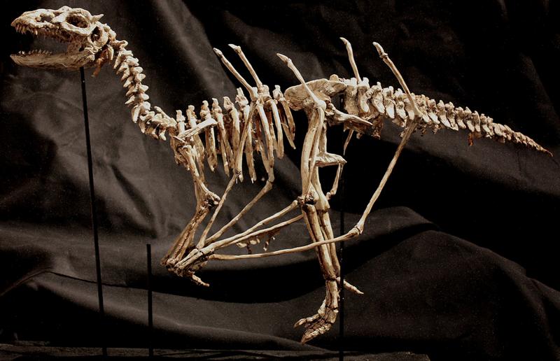 Полный скелет Draco Alatus. интересное, лондон, непознанное, томас мерлин