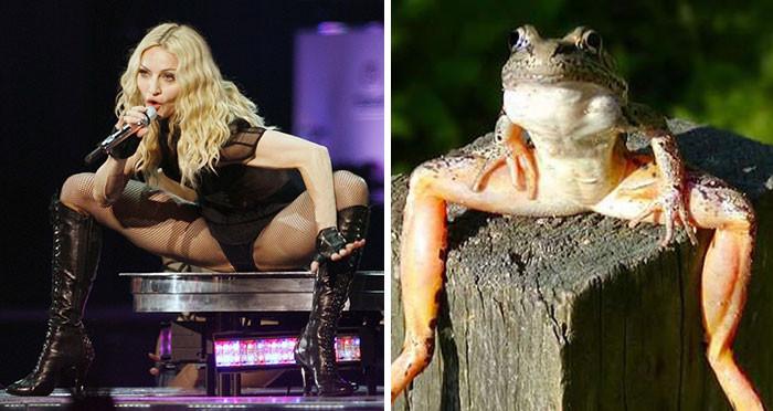 8. Мадонна выглядит как лягушка вещи, люди, похожие лица, схожесть